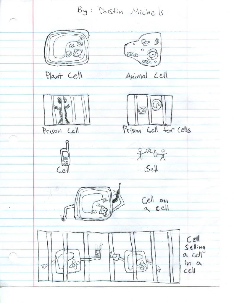 a cartoon showing various types of cells